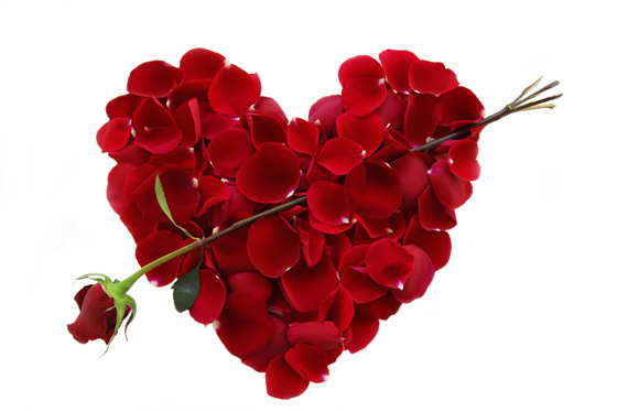 Send Roses to your loved one in Bradford